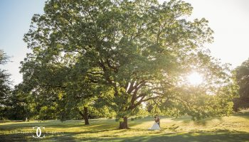 Brides under the branch of a large pecan tree on the Garey House grounds, with sunshine peeking through the branches