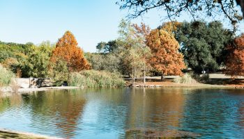 Garey House pond and trees in November